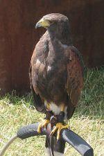 Hunting Bird © essentially-england.com