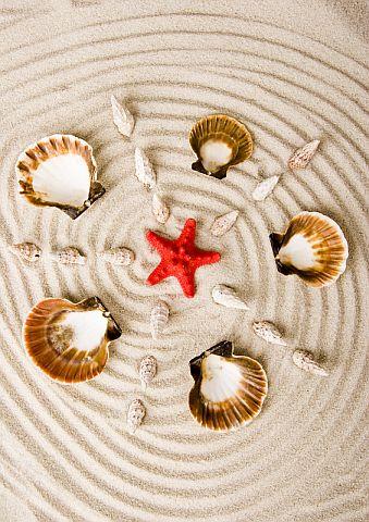 Seashells and Starfish © Janpietruszka   Dreamstime.com