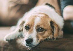 Dog Friendly Holiday Cottages | sykescottages.co.uk