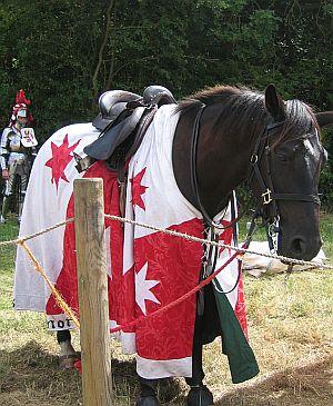 Medieval Destrier © essentially-england.com