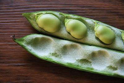 Broad Bean Recipes