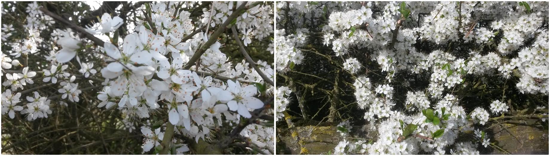 Spring Blossom © essentially-england.com