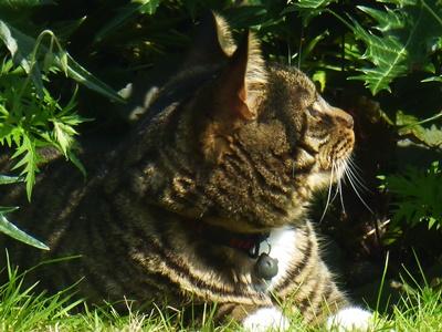 Tiger enjoying English summer | © essentially-england.com