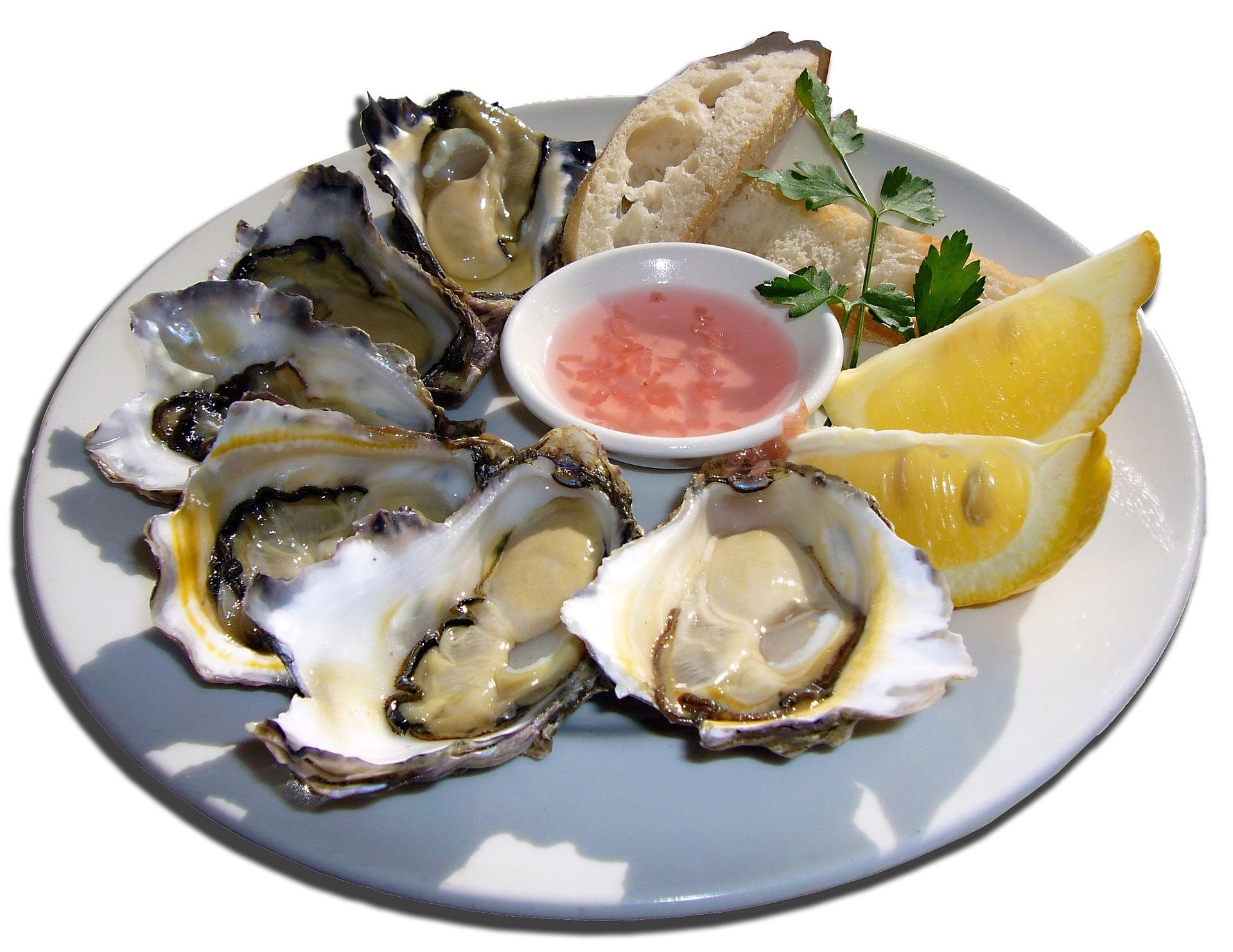 Oysters | joakant pixabay.com